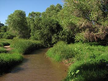 The Santa Cruz River. Photo courtesy of Friends of the Santa Cruz River.