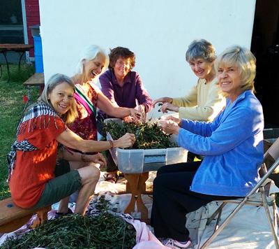 Preparing organic herbal teas with friends.